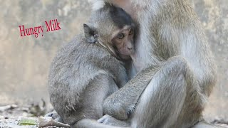 Baby Monkey Hungry Milk From Mama,Adorable baby monkey Need Milk So much
