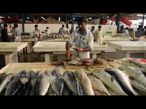 Dubai Fish Market Tour - 2017
