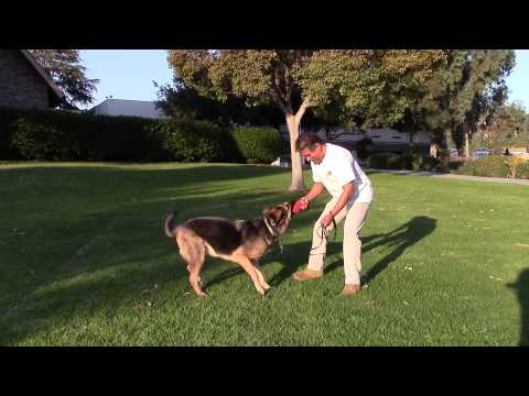 sirius-k9-academy-basic-obedience-test-demonstration---recess