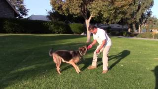 Sirius K9 Academy Basic Obedience Test Demonstration - Recess