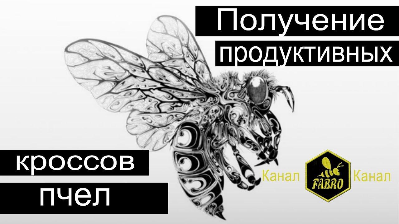 Получение продуктивных кроссов пчел - Просюк Виктор