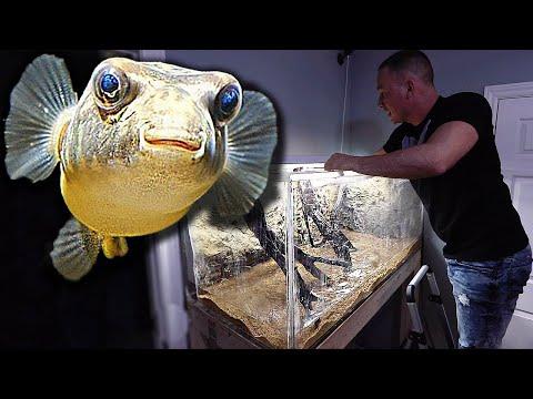 The PUFFER FISH AQUARIUM Is Done!!