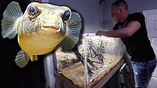 the-puffer-fish-aquarium-is-done