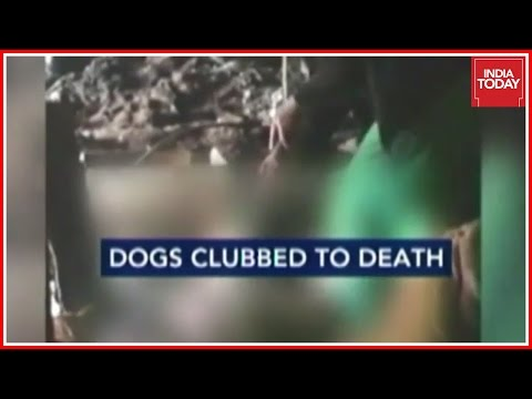 Horrific Dog Meat Trade Of Nagaland Caught On Camera