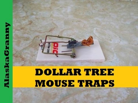 Dollar Tree Mouse Traps