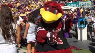 VIDEO: LSU plays Gamecocks songs