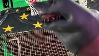 SHARK PUPPET PLAYS BASKETBALL