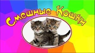 ♬Забавные кошки, смешные дети♫юмор, смешные животные, супер прикол♫