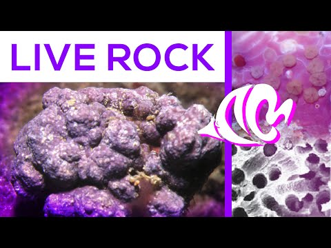 Rocks Are Alive?:  What YOU Need To Know About Live Rock!