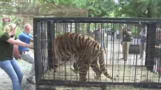 Ny Tiger Rescue Teaser