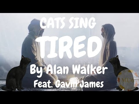 Cats Sing Tired by Alan Walker feat. Gavin James | Cats Singing Song