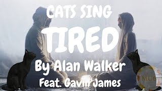 Cats Sing Tired by Alan Walker feat. Gavin James   Cats Singing Song