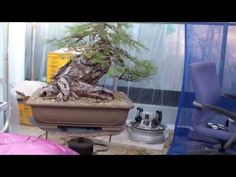 유랑아제 의 해송 손보기 4번째(완성) 동영상
