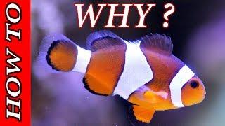 Aquarium: WHY we keep aquarium @home