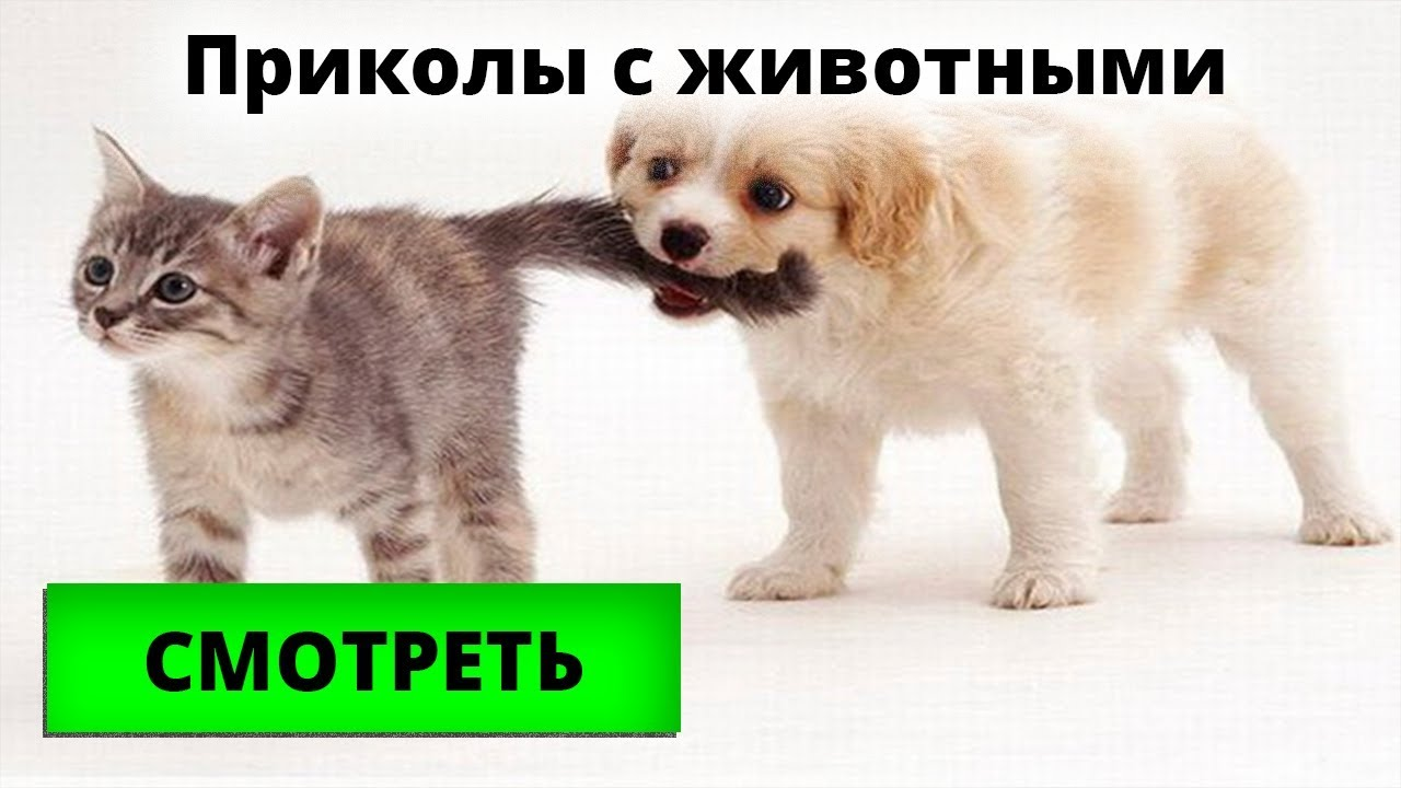 Прикольные котики и собачки, подборки видео с домашкими животными