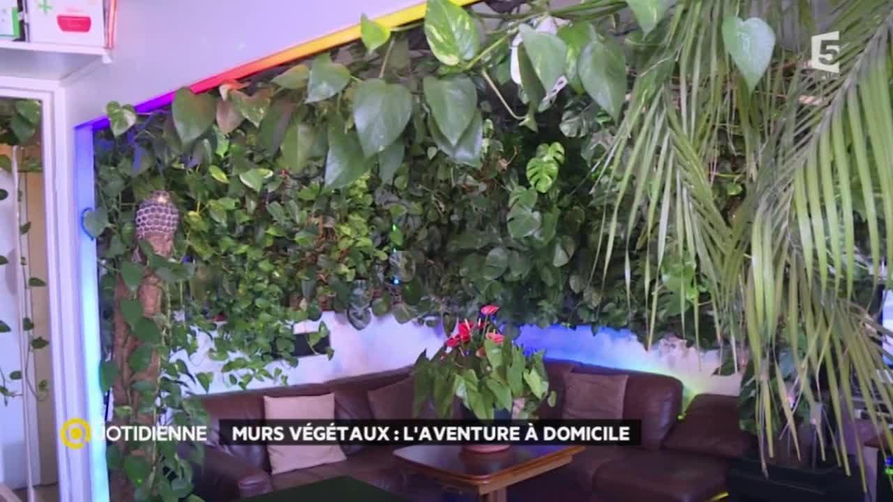 Mur Vegetal Plante Grasse un mur végétal dans mon salon
