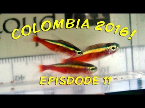 Colombia 2016 - Episode 11 - Cano Vitina