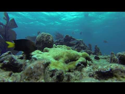 Reef Ecosystems of South Florida
