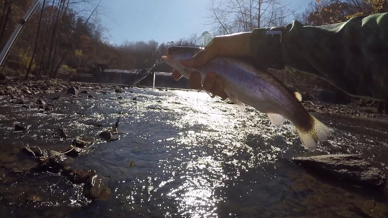 How to Fish for Trout in a River/Creek by 1Rod1ReelFishing ...