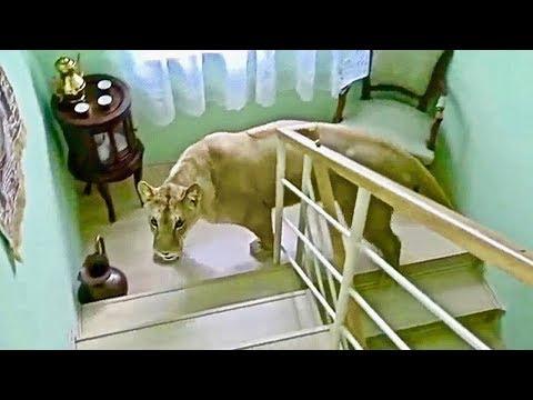 10 Most DANGEROUS Animals Kept As Pets!