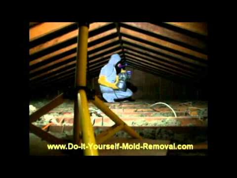 Do It Yourself Mold Removal System