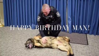 K9 Max's Surprise Birthday Party