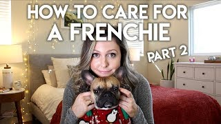 HOW TO TAKE CARE OF A FRENCHIE PART 2