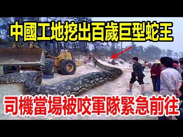 中國工地挖出140歲巨型蛇王,司機當場被咬軍隊緊急前往,驚魂30秒令人毛骨悚然!