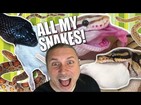 FEEDING ALL MY SNAKES IN ONE !!  BRIAN BARCZYK