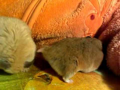 Забавы вебку фото как ебутся крысы