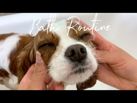 BATH ROUTINE FOR DOGS // In depth Step By Step and Favorite Products!