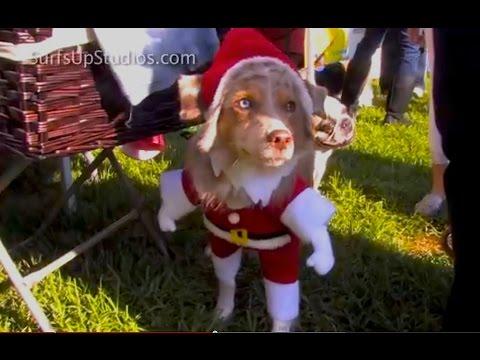 Cat Dog Secret Lives of Pets - Funniest Doggie DRESS-UP