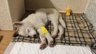 Девушка приютила щенка и уже через два часа поняла, что с ним что то не так