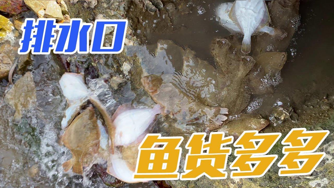 【English sub】小章赶海遍地都是大鼓包,还有排水口排放出一条又一条的大鱼,小章赶的太巧了!【赶海小章】