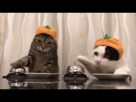 #лучшее #коты #кошки #смешные_коты Коты смешное видео 2020. #cats #video #funny #best Cats Funny.