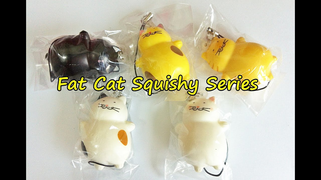 Squishy Synonym : Image Gallery squishy cat