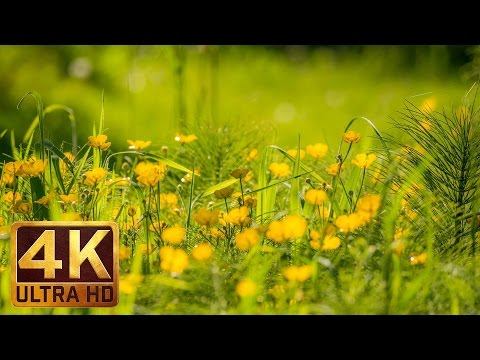 4K Nature Relaxation Video - FLOWERS - Trailer 28