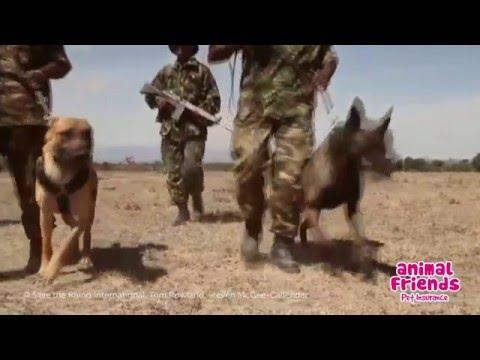 animal-friends-donates-£10,000-to-save-the-rhino-international