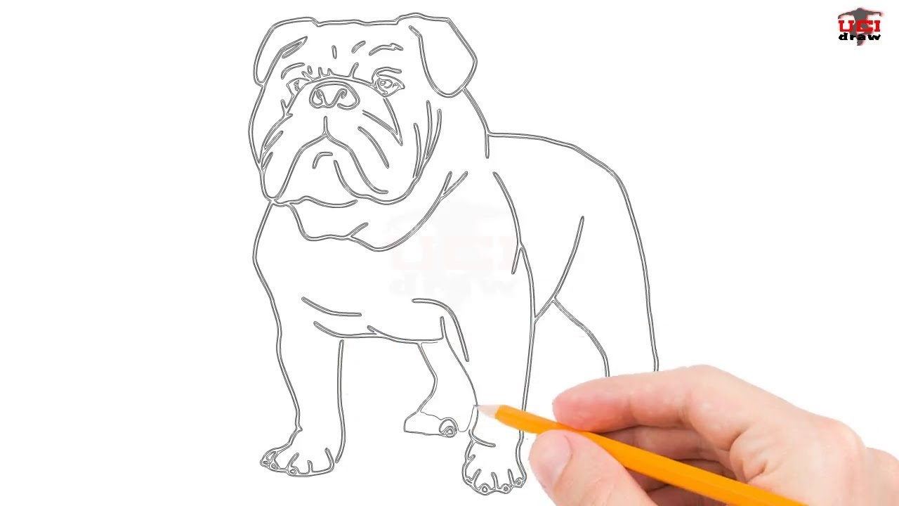 how to draw a bulldog stepstep easy for beginners/kids – simple