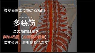『腰痛症』 に対する エコー観察下 鍼施術(腰部 多裂筋)