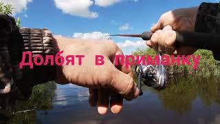 Отводной поводок Окунь Рыбалка с женой Сезон 2021
