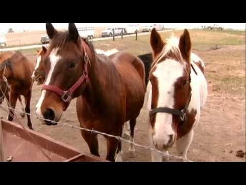 HSMO Andrew County Horse Rescue