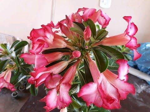 aprenda a fazer suas plantas florirem em grande quantidade e como cuidar delas.