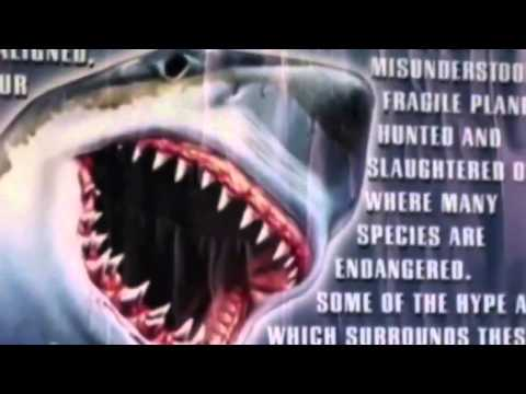 Great White Shark Deep Water Documentary HD 2015