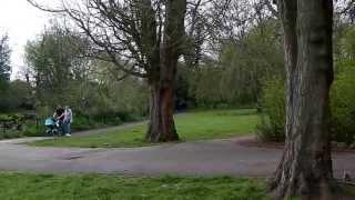 The river wandle trail  - london jog