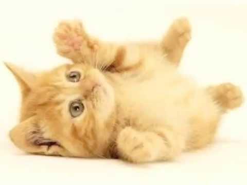 Gatitos Bonitos Lindos Y Hermosos Youtube