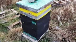 mudsongs.org: Cheap Hive Wrap
