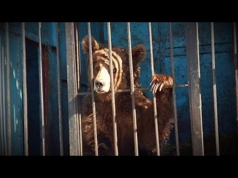Three Lions and Two Bears Desperate for Care at The World's Saddest Zoo