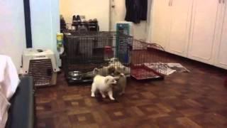 Lotsa Puppies