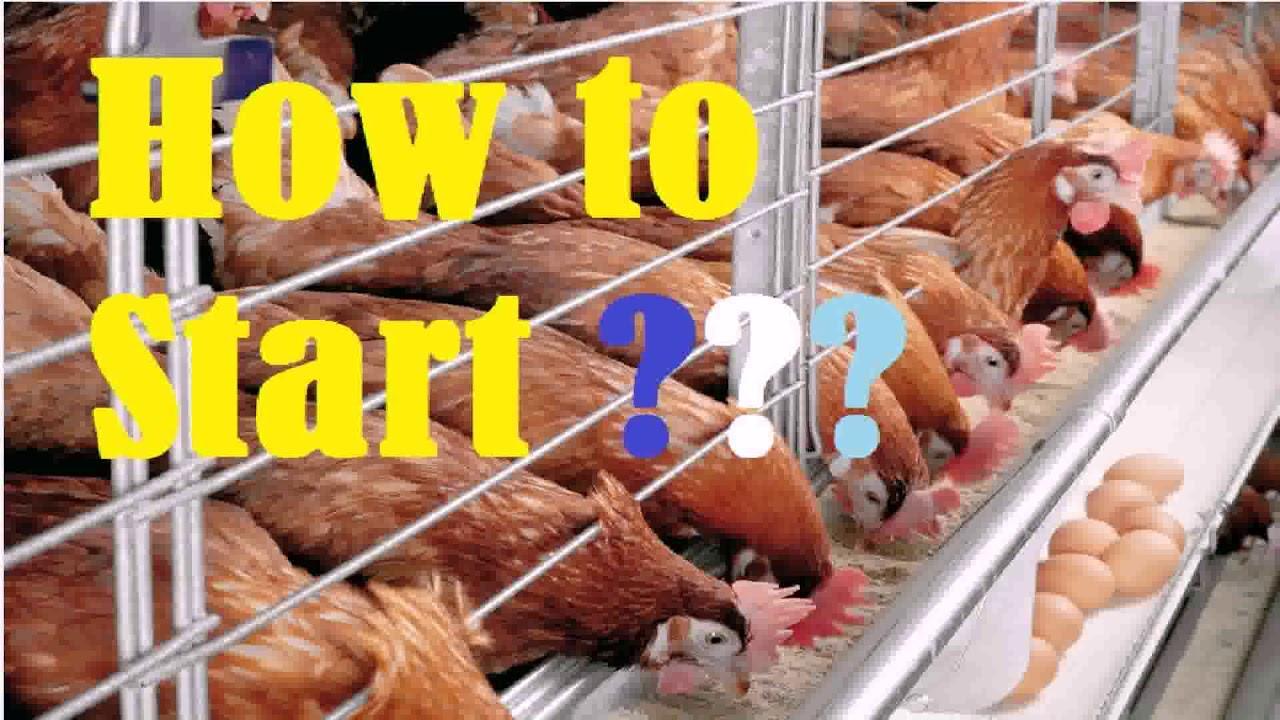 Modern Poultry House Design In Kenya (see description ...